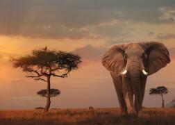Ravensburger 15159 Puzzle: Elefant in Masai Mara Nationalpark, 1000 Teile