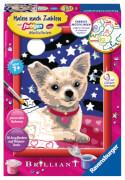 Ravensburger 278411 Malen nach Zahlen: Lieber Chihuahua, Malset